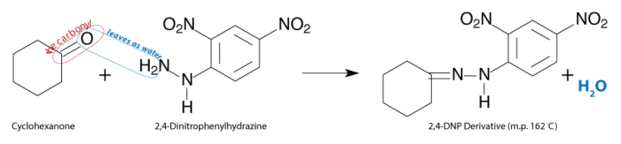 Cyclohexanone reacts with 2,4-dinitrophenylhydrazine